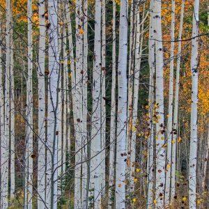 pexels-photo-414644
