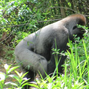 Community, Conservation and Primates