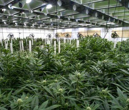 2 - medical marijuana